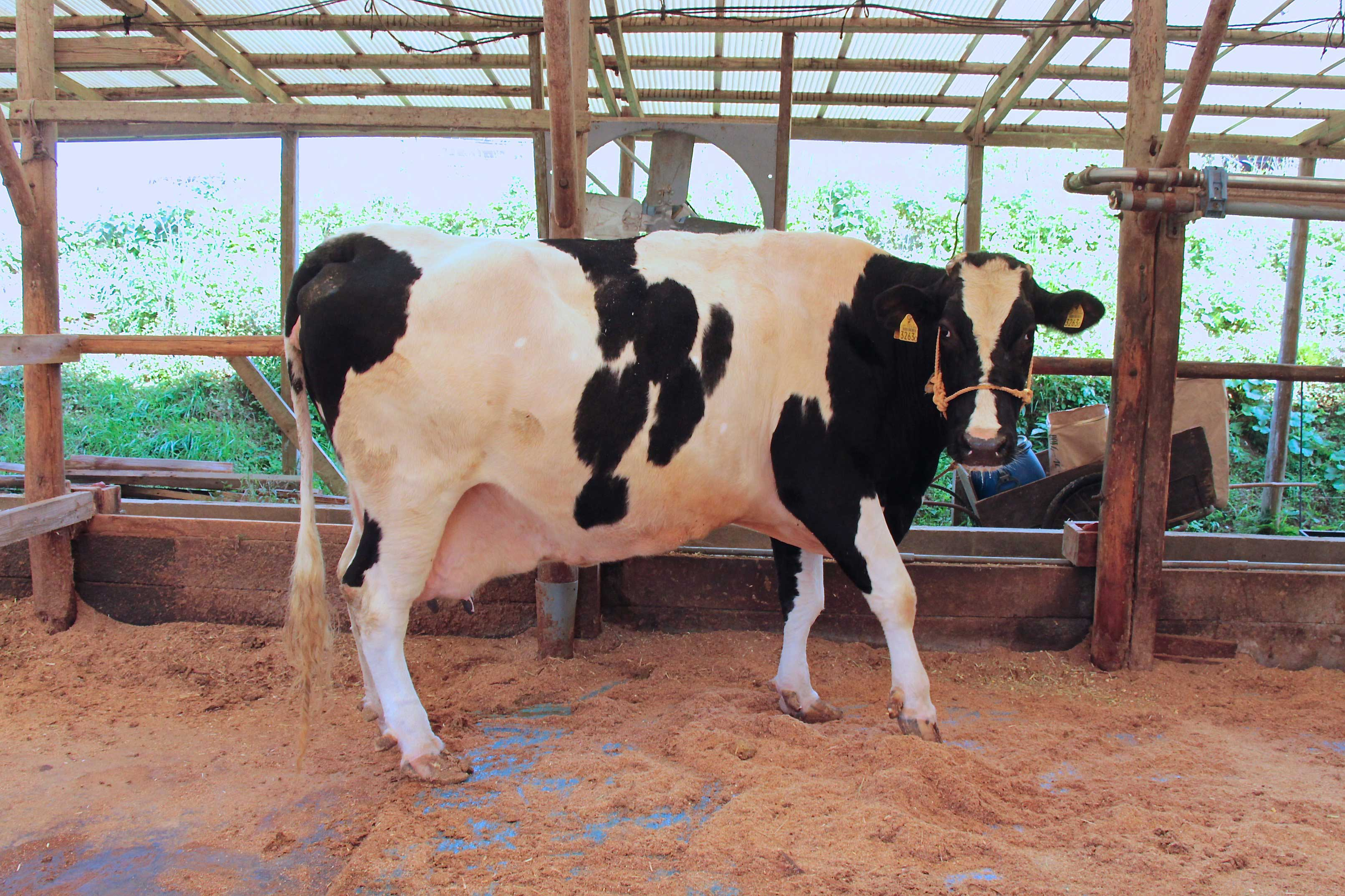 湯野牧場-エコ牛乳